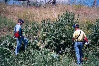 Noxious Weed Control