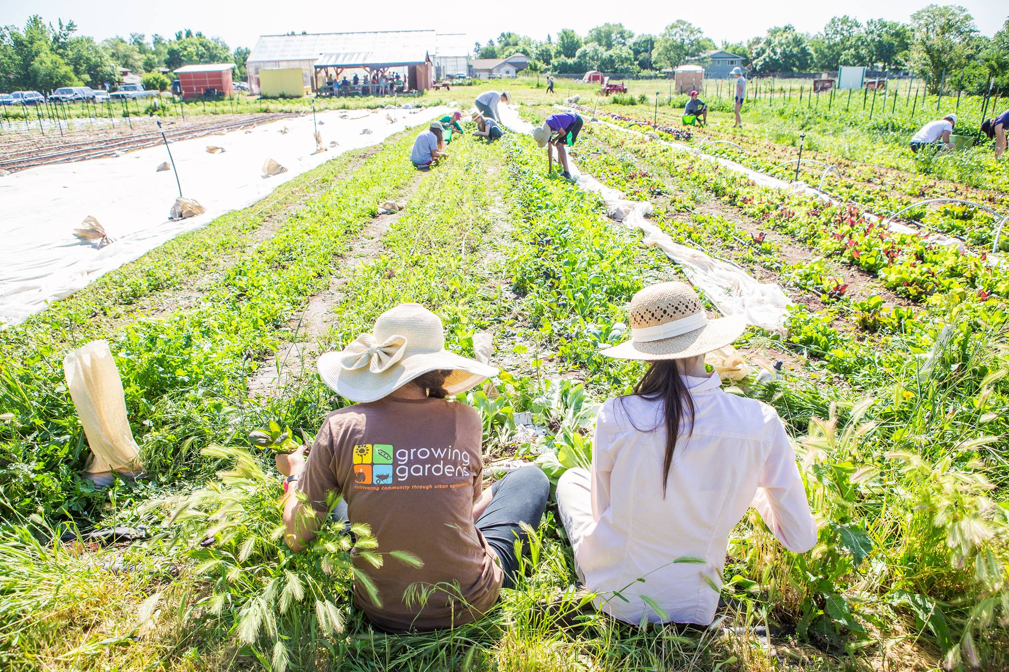 Our Cultiva Youth Project is an organic farm CSA cultivated by teens near downtown Boulder!