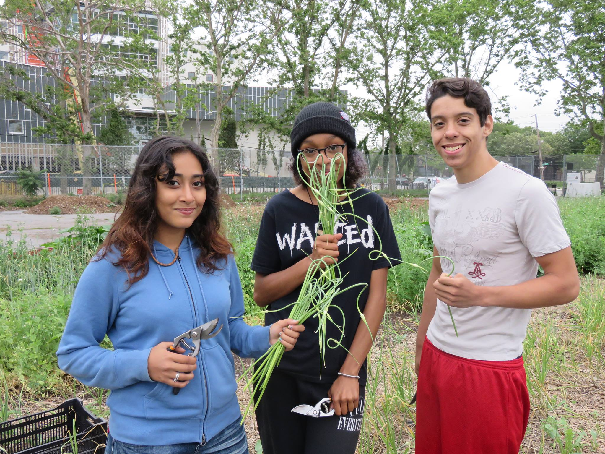 Red Hook Community Farms