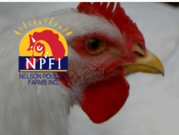 Company logo of Nelson Poultry Farms Inc