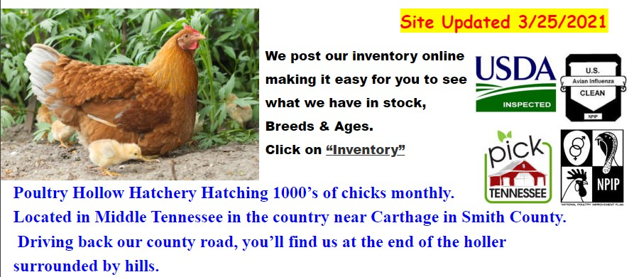 Poultry Hollow Hatchery