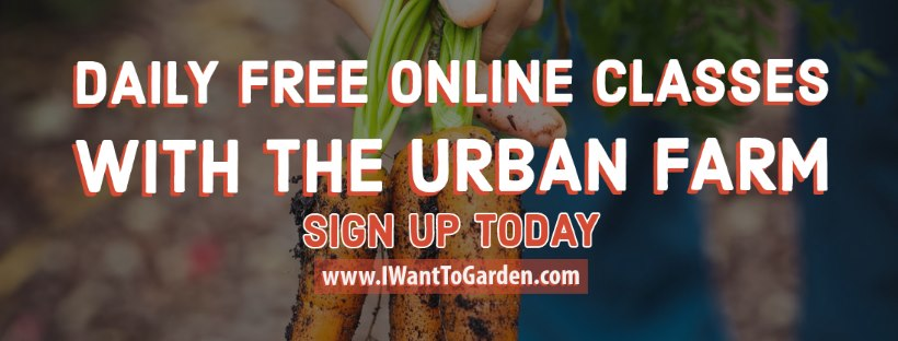 Urban Farm Nursery - Open by Appointment Only